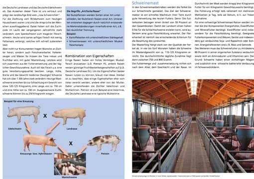 Schweine-Unterrichtmaterial, zwei verkleinerte Beispielseiten