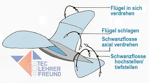 Möwe - Flügelverdrehung