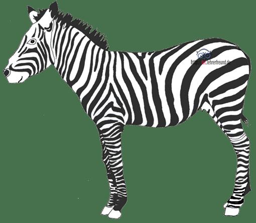 Zebrastreifen zeichnen den Körper des Zebras nach