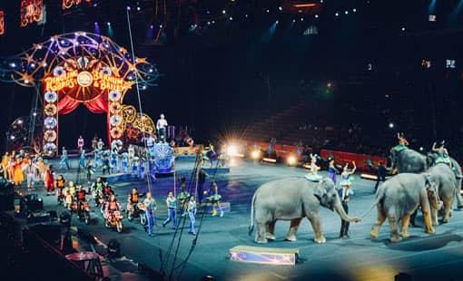 Elefanten-Show im Zirkus