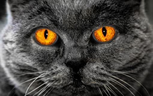Hypnotisierte Katze