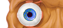 Kontroll-Auge