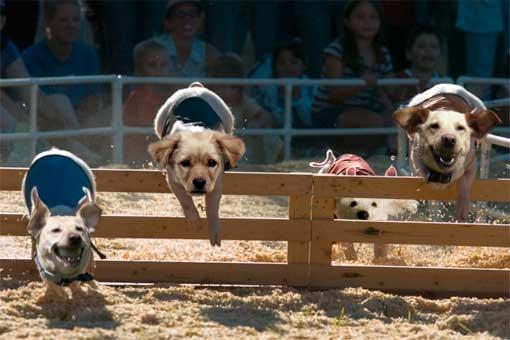 Schweinehund-Rennen