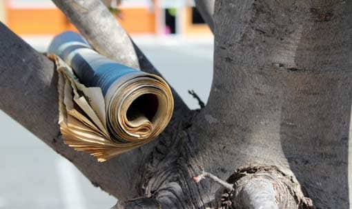 Zeitung in einem Baum